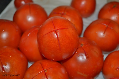 Tomatoes for homemade tomato sauce - AMerryMom.com