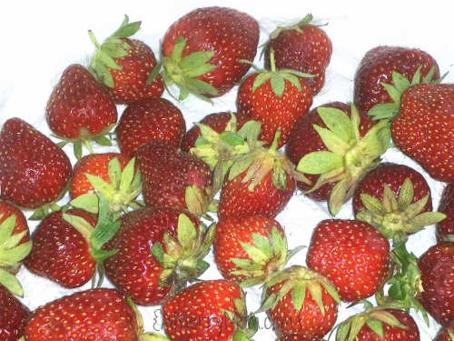 Keeping strawberries fresh in the refrigerator | AMerryMom.com