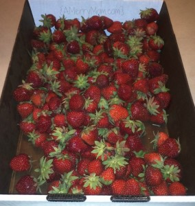 Fresh strawberries | AMerryMom.com