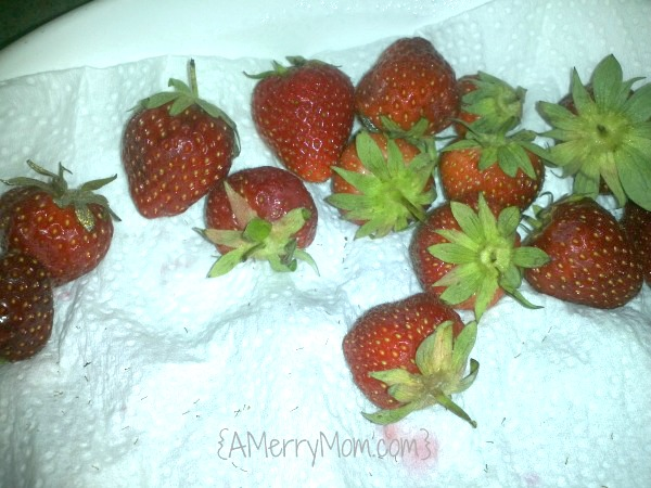 Keep strawberries fresh in the refrigerator after picking them | AMerryMom.com
